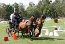 Das New Forest Pony_11