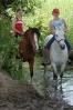 Das New Forest Pony_12