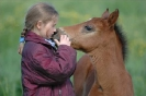 Das New Forest Pony_20