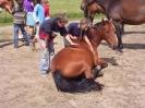 Das New Forest Pony_24