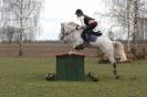 Das New Forest Pony_2