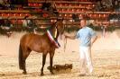 Das New Forest Pony_34