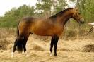 Das New Forest Pony_38