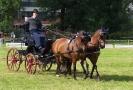 Das New Forest Pony_39