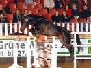 Das New Forest Pony_40
