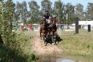 Das New Forest Pony_41