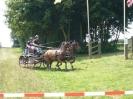 Das New Forest Pony_44