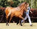 Das New Forest Pony_45