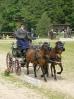 Das New Forest Pony_46