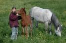Das New Forest Pony_48