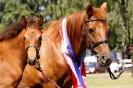 Das New Forest Pony_6